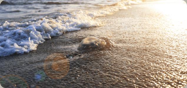 Poparzenie od meduzy i inne wakacyjne wypadki – jak sobie z nimi radzić?